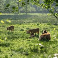Onderzoek duurzaamheid NL Vleesveesector
