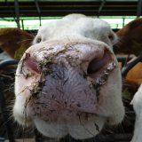 Dalende lijn antibioticagebruik in Nederland