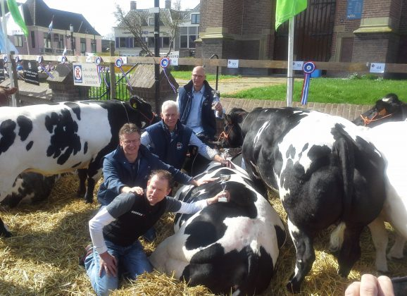 Geen fokverbod voor luxe vleesveerassen in NL